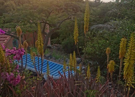 Maria – La Gomera März 2020